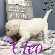 Cleo (11).jpeg