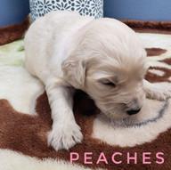 peaches (1).jpeg