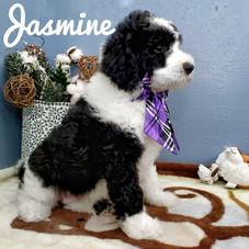 Jasmine (15).jpeg