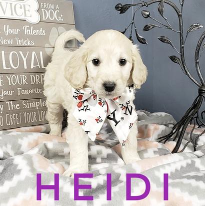 Heidi (2).jpeg