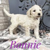 Bonnie (3).jpeg
