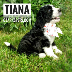 tiana (6).jpeg