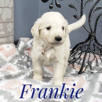 Frankie (7).jpeg