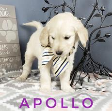 Apollo (2).jpeg