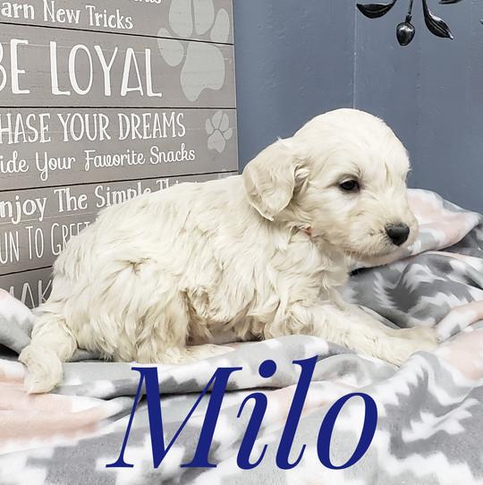 Milo (5).jpeg
