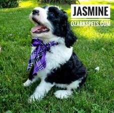 jasmine (10).jpeg
