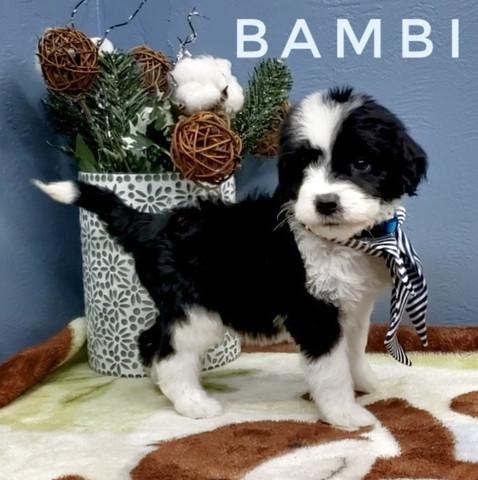 BAMBI (6).jpeg