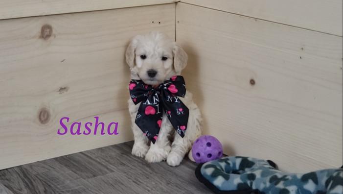 Sasha (2).jpg