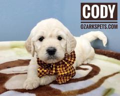 Cody (11).jpeg