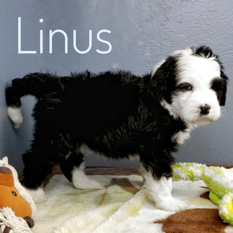 Linus (4).jpeg
