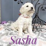 Sasha (5).jpeg