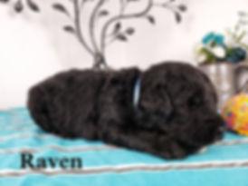 Raven (2).jpg