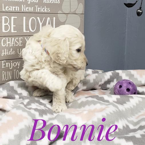 Bonnie (5).jpeg