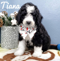 Tiana (18).jpeg