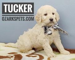 Tucker (8).jpeg