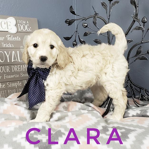 Clara (3).jpeg