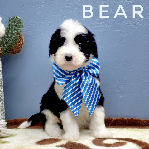 BEAR (7).jpeg