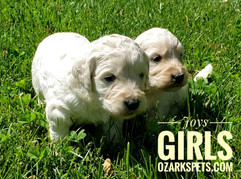 Joy Girls (4).jpeg