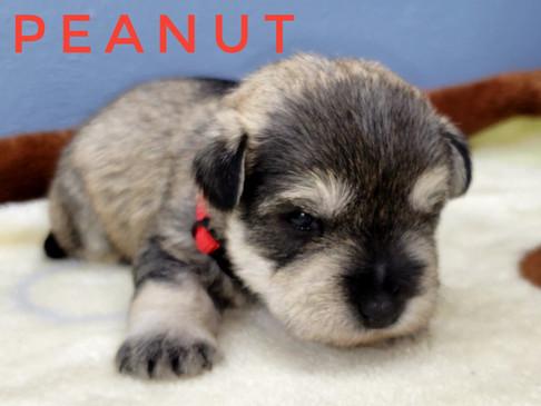Peanut (3).jpeg