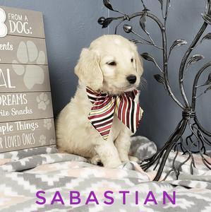 Sabastian (7).jpeg