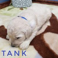 tank (1).jpeg