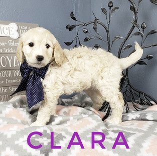 Clara (1).jpeg