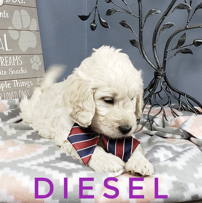 Diesel (5).jpeg