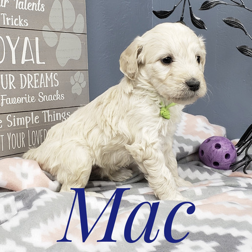 Mac (4).jpeg