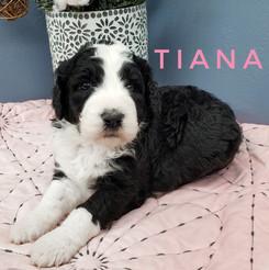 Tiana (2).jpeg