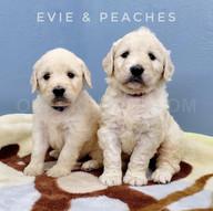 Evie Peaches (6).jpeg