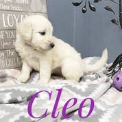 Cleo (9).jpeg
