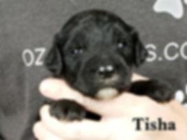 Tisha (5).jpg