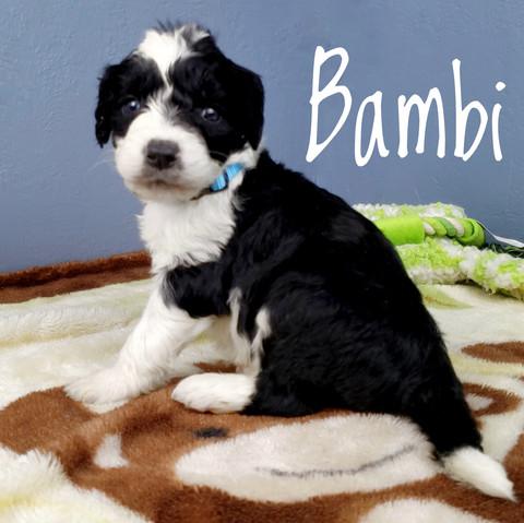 bambi (2).jpeg