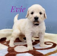 Evie (5).jpeg