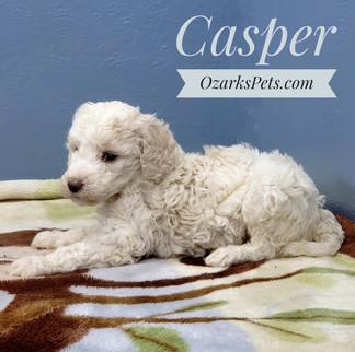 Casper (4).jpeg