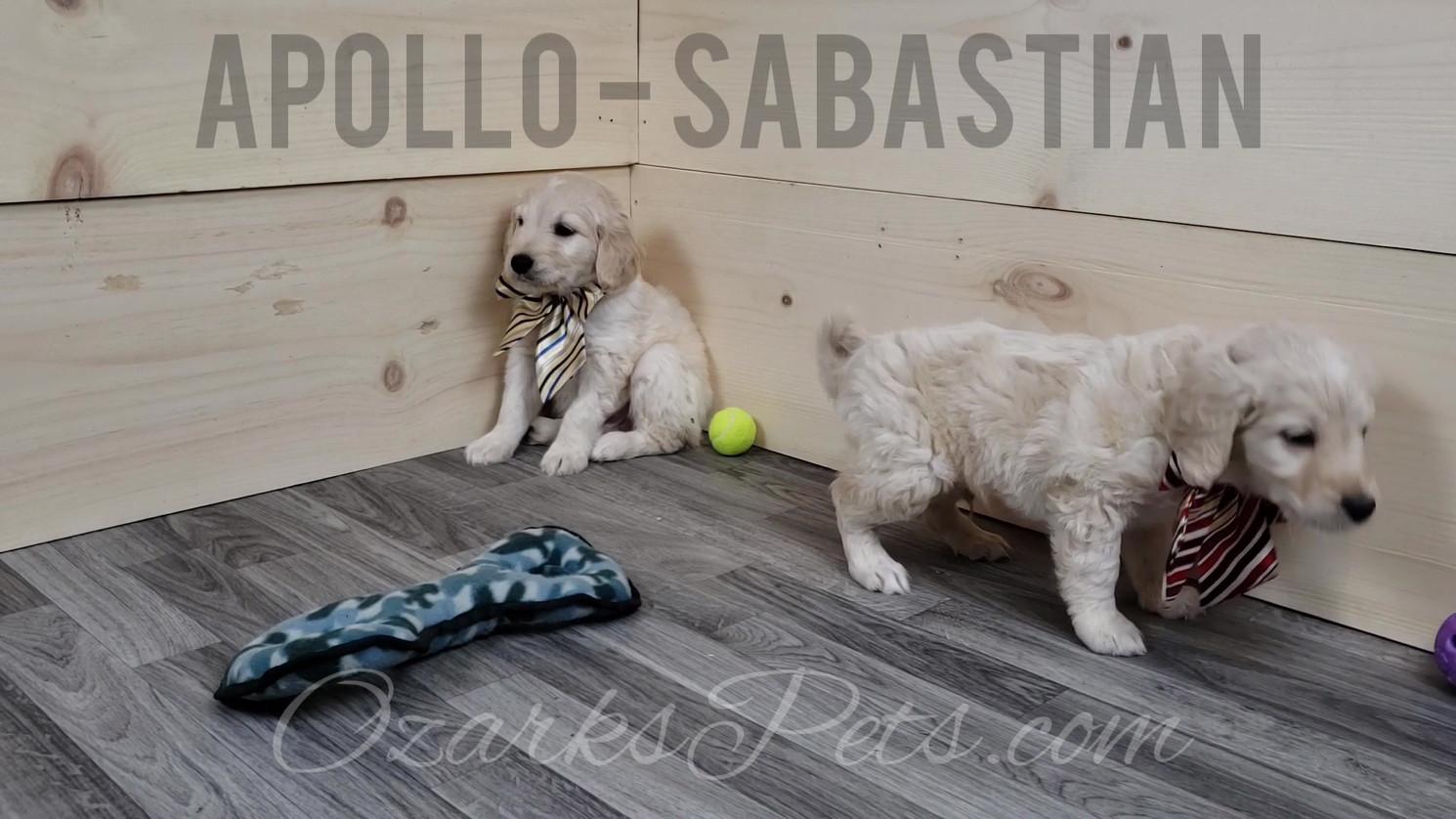 Apollo Sabastian.mp4
