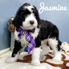 Jasmine (14).jpeg