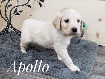 Apollo (1).jpg