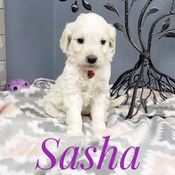Sasha (3).jpeg