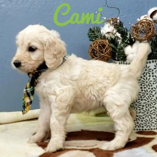 Cami (1).jpeg
