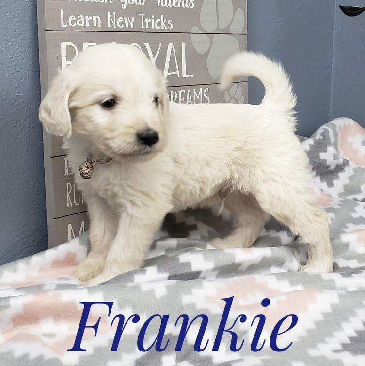 Frankie (6).jpeg