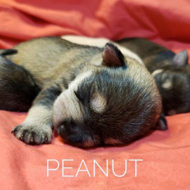 peanut.jpeg