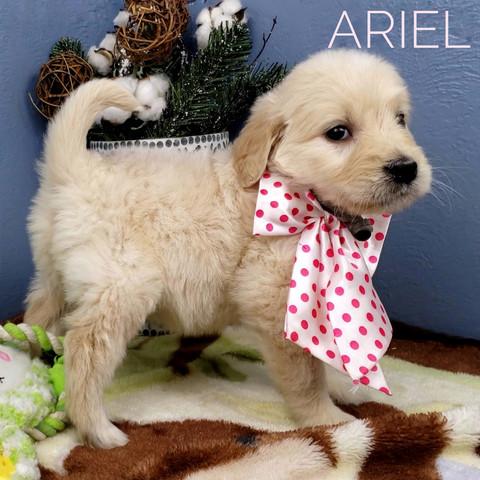 ARIEL (2).jpeg