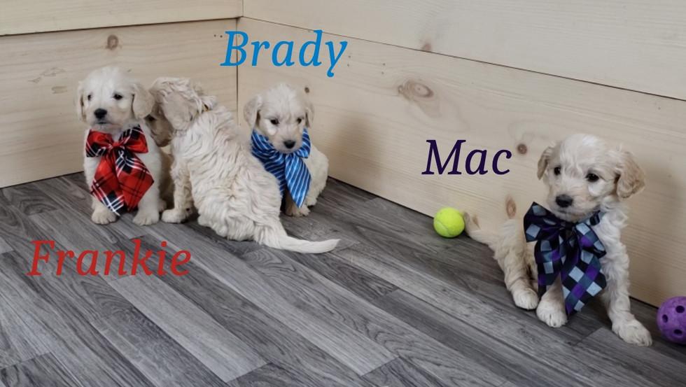 Frankie Brady Mac (2).jpg