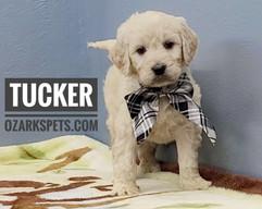 Tucker (4).jpeg