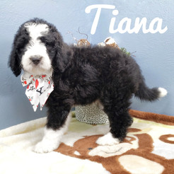 Tiana (17).jpeg