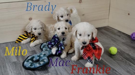 Milo Brady Mac Frankie.jpg