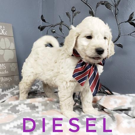 Diesel (3).jpeg