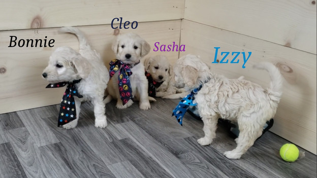 Bonnie Cleo Sasha Izzy.jpg