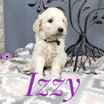 Izzy (5).jpeg
